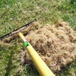 rake thatch