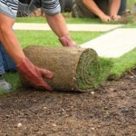 Man laying fresh sod in a yard